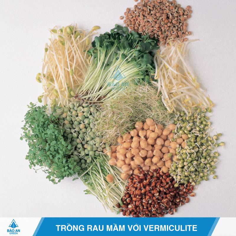 Giá thể Vermiculite trồng rau mầm