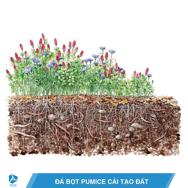 Đá bọt Pumice cải tạo đất, tăng năng suất cây trồng