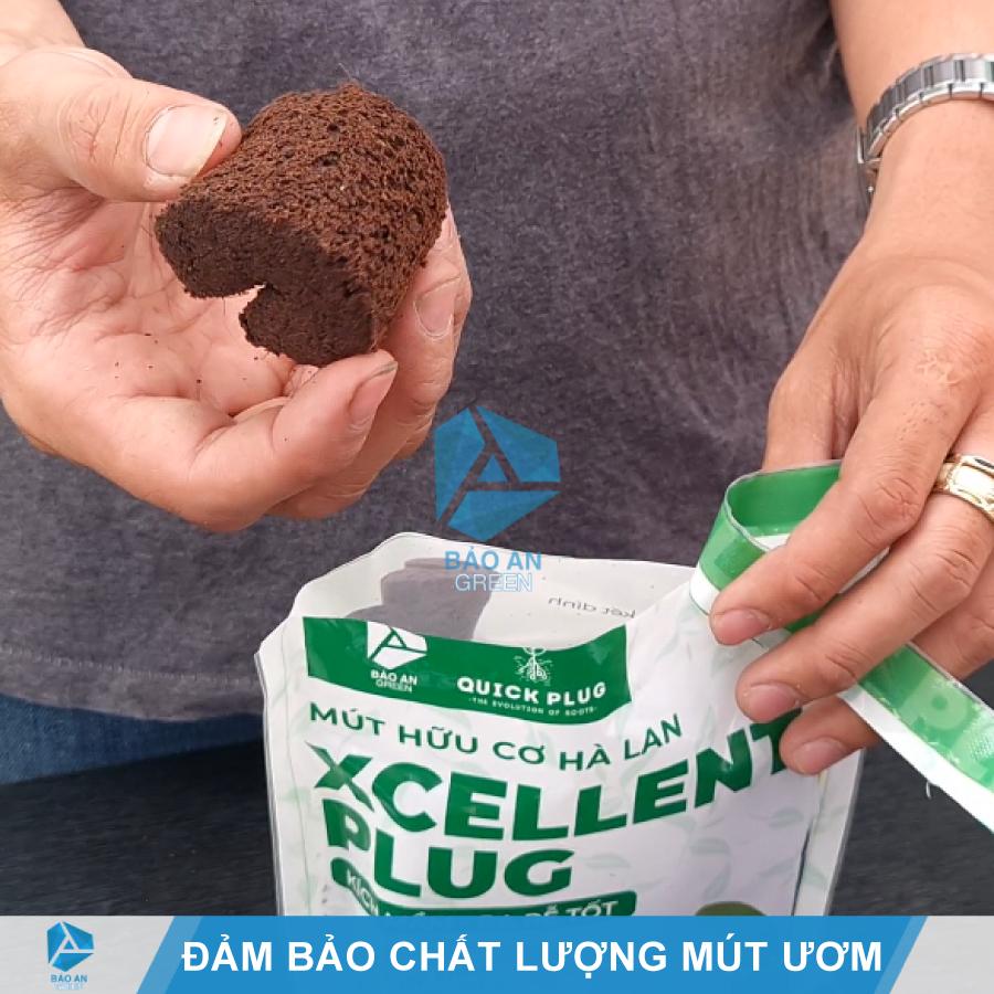 Bảo quản Mút hữu cơ ươm Keiki Lan đúng cách để đảm bảo chất lượng ươm