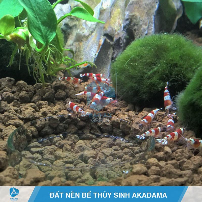 Đất nền bể thủy sinh với đất nung Akadama