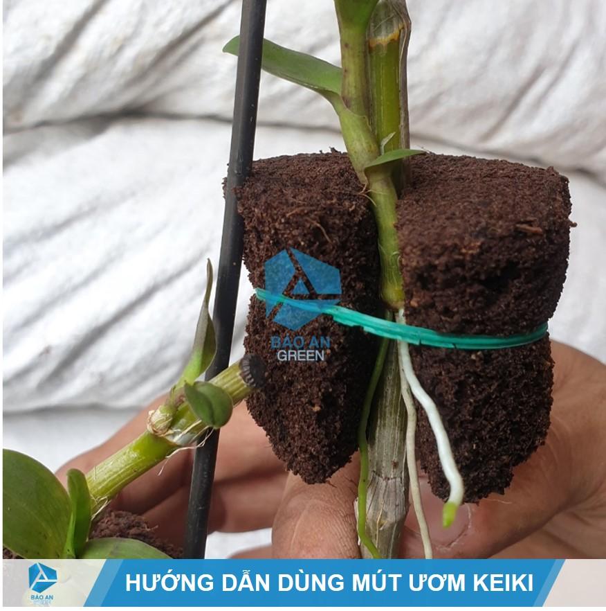 Hướng dẫn sử dụng Mút Hữu cơ ươm Keiki Lan chính hãng hiệu quả nhất
