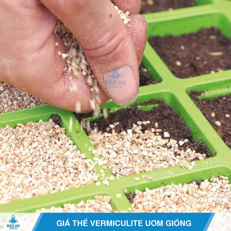 Giá thể Vermiculite ươm giống hiệu quả