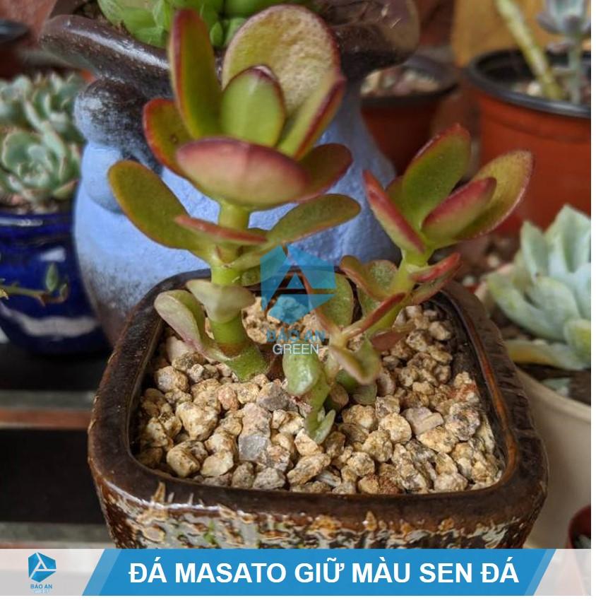 Đá Masato giữ màu Sen đá siêu đẹp