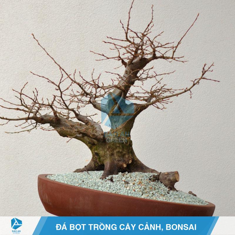 Giá thể đá bọt Pumice trồng cây cảnh và Bonsai