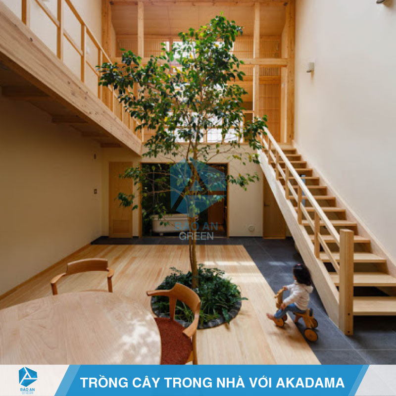 Trồng cây cảnh trong nhà với đất nung Akadama hiệu quả