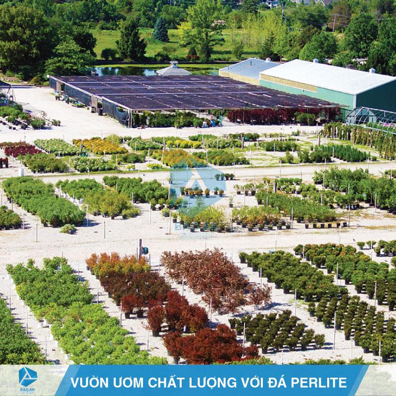 Vườn ươm nhân giống cây trồng hiệu quả với đá Perlite
